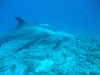 swimming-with-dolphins-off-gumble-island